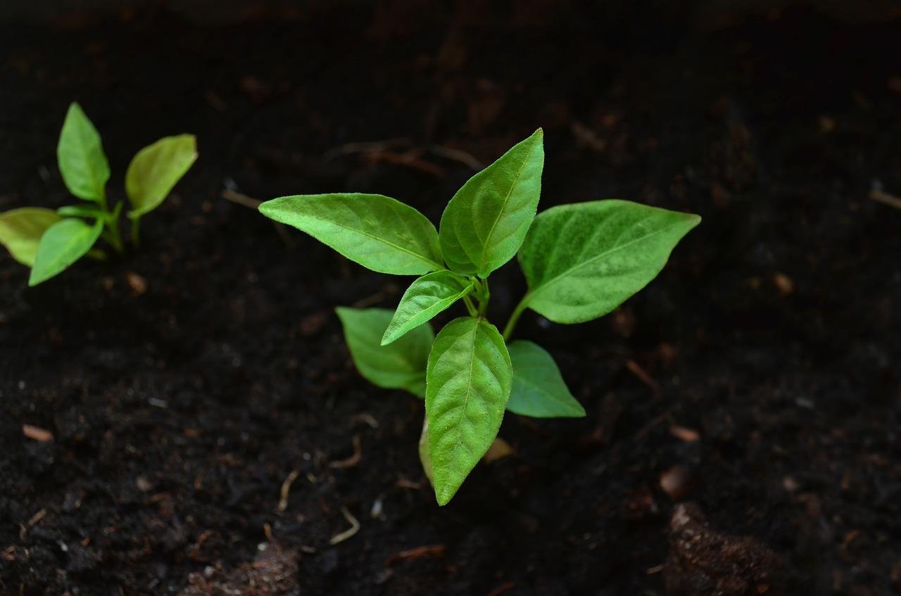 Quelles sont les prestations proposées par un livreur de terre végétale ?